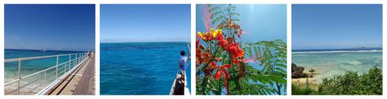 Oisix(オイシックス) 島とうふ仕立て