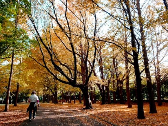 FM横浜「E-ne! 〜good for you〜」で5日間秋のグルメを紹介させていただきました。