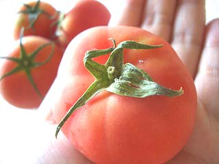 フルーツトマト&部屋中いっぱい爽アロマ Super生バジル/おいしっくす(オイシックス/Oisix)