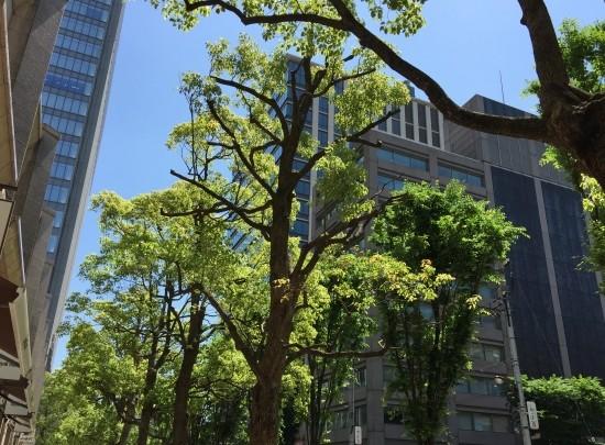 東京神保町に新しい商業施設「テラススクエア」大人のための個性的な食と発想の空間