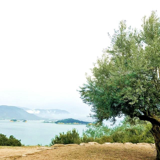 「オリーブを五感で楽しむ香川・小豆島の旅」スケジュールとまとめ